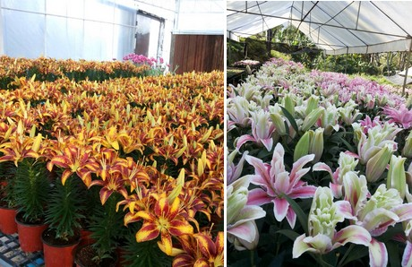 """FloralDaily.com : """"High demand for European flowers in ..."""