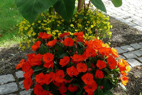 Anthurium bloeit niet
