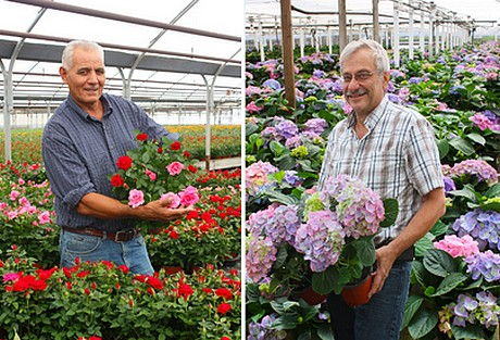 Known Within The Industry For Its Quality Products Most Por Are Miniature Rose Hydrangea And Gardenia Varieites Bred In Santa Barbara