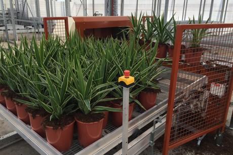 Au New Pot Plant Handling System For Dans Plants