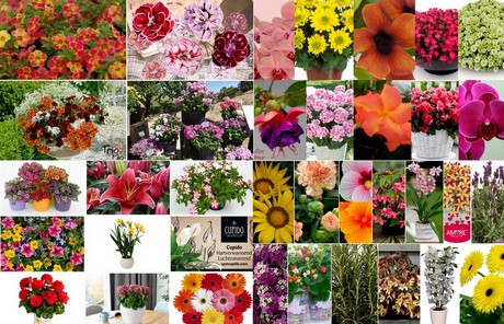 FloralDaily.com : FlowerTrials 2016: the take off