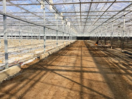 Interplant Roses expands in Holland