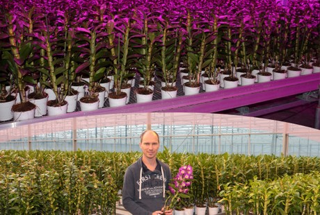 Growing orchids sustainably under LED