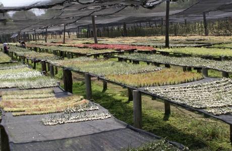 """FloralDaily.com : """"Holiday season increases tillandsia sales"""""""