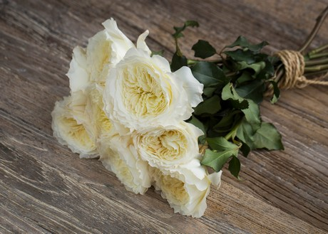 the 5 most popular garden roses of 2016 - White Patience Garden Rose