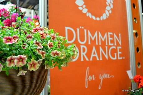 FloralDaily.com : Germany: Dümmen Orange present at ...