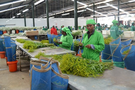 FloralDaily.com : Kenya: Oserian aims to become carbon neutral
