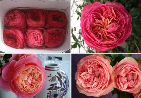 673935208f3 In 2016, they expanded the farm again, to 23 ha, and decided to add another  type of rose, the garden type rose.