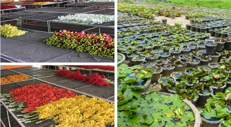 New company boosts Thai flower exports