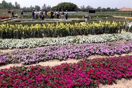 Bangladesh Hosts International Flower Expo
