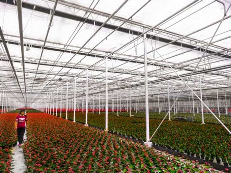 Chinese grower saves energy with climate screens