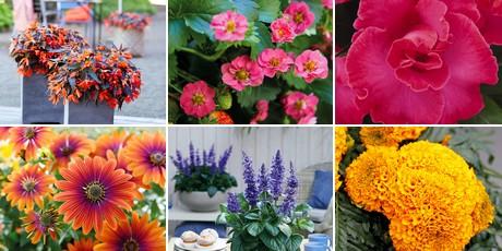 Six plants compete for FleuroStar