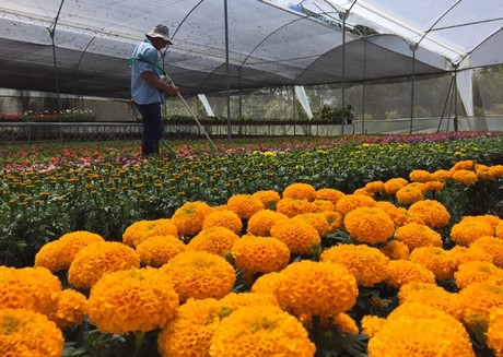 Colombia gets new trade show: ExpoPlantas