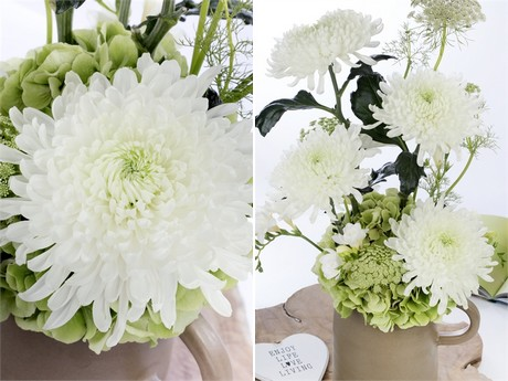 Deliflor Introduces White Disbudded Chrysanthemum Falcon