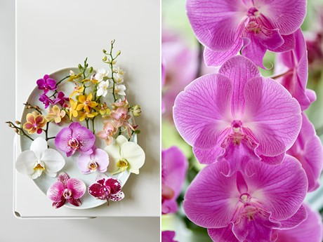 What they all have in common is an exotic look, flower for a long time, and are easy to maintain.