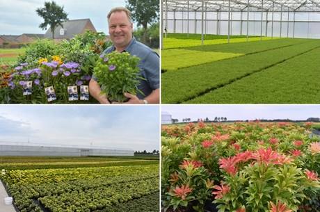 Floraldaily global flower news a peek at belgium garden plant nursery asra plant mightylinksfo