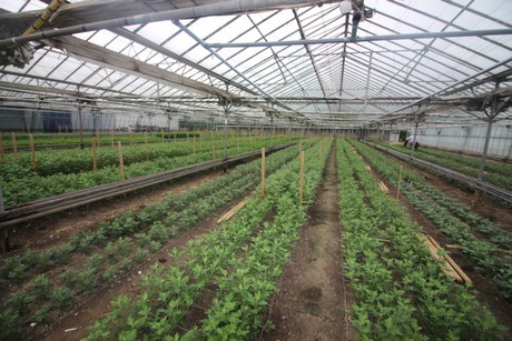 The Nursery Is Up For Through Quiton Edwards Who Are Chartered Surveyors Offering Commercial Property Advice To Garden Centre And Horticultural